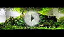 2014 AGA International Aquascaping Contest ( ALL AQUARIUMS)